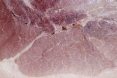 ham-world-1550680